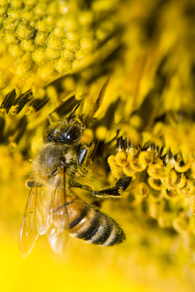 A honeybee near a flower