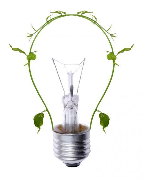 image of a lightbulb made of vines